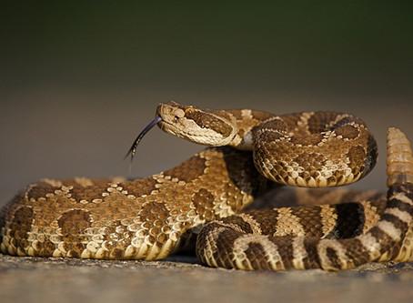 How to Survive a Venomous Snake Bite