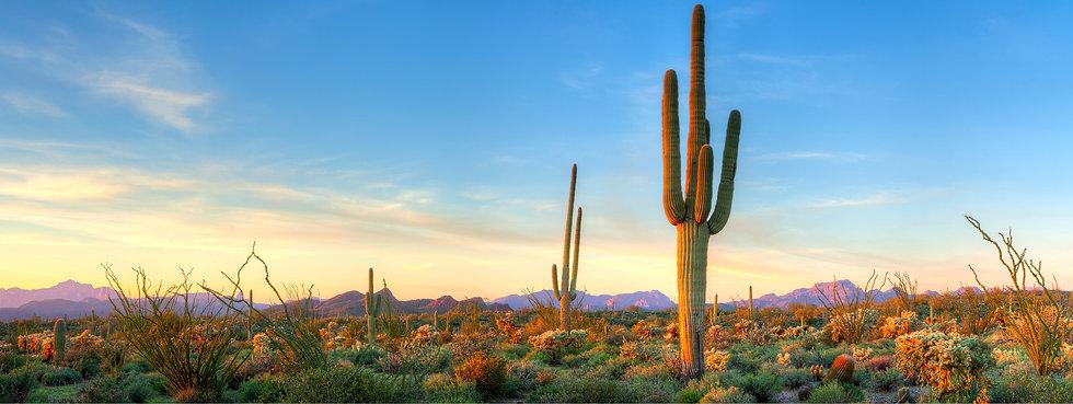 Desert Image.jpg