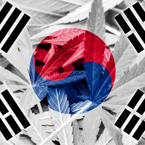 Is CBD Legal in Korea? How to Get Started?