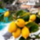 limoni large image.jpg