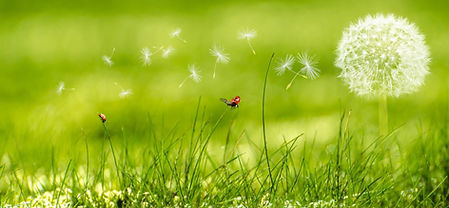 landscape-water-nature-grass-dew-wing-13