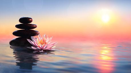 Lotus en gestapelde stenen.png