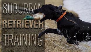 Suburban Retriever Training