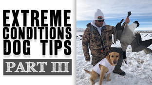 Extreme Conditions Dog Tips III