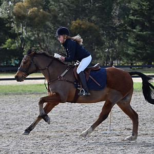 Showjumping, Games, Ground Work and Dressage