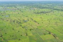 Padi fields galore