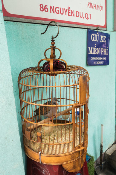 Songbirds of Saigon