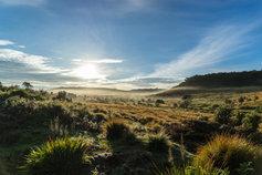 Misty mornings on the plains