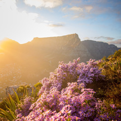 Cape Town in bloom