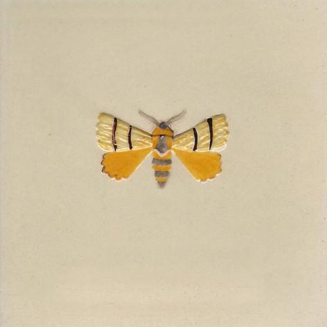 Pentimento Ceramics and Print_Lackey Moth_Malacosoma neustria_insect_buglife_Handmade_bespoke_ceramic tile_hand decorated_original art