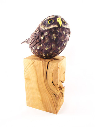 Owl on Lime