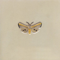 Pentimento Ceramics and Print_White Ermine Moth_spilosoma lubricipeda_insect_buglife_Handmade_bespoke_ceramic tile_hand decorated_original art