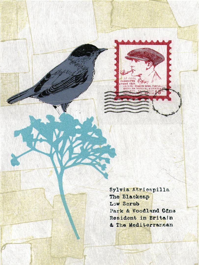 Pentimento Ceramics and Print_homonym_bird_blackcap_printmaking_collograph_gum arabic transfer_A4 print_limited edition print_british birds_original print