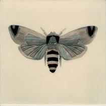 Pentimento Ceramics and Print_Goat Moth_Cossus Cossus_insect_Handmade_bespoke_ceramic tile_hand decorated_original art