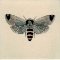 Pentimento Ceramics and Print_Goat Moth_Cossus Cossus_insect_Handmade_bespoke_ceramic tile_hand decorated_original art