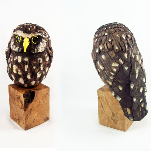 Owl on spalted birch