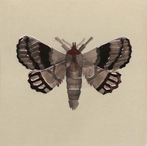 Pentimento Ceramics and Print_Lappet Moth_Gastropacha quercifolia_insect_buglife_Handmade_bespoke_ceramic tile_hand decorated_original art