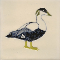 Pentimento Ceramics and Print_Eider Duck_seabird_Handmade_bespoke_ceramic tile_hand decorated_original art