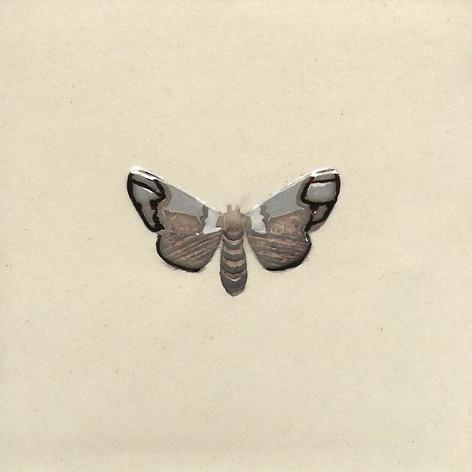 Pentimento Ceramics and Print_Puss Moth_Bugs_cerura vinula_insect_Handmade_bespoke_ceramic tile_hand decorated_original art