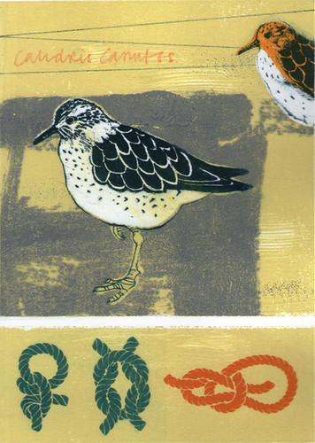 Pentimento Ceramics and Print_homonym_bird_Knot_sea bird_printmaking_collograph_gum arabic transfer_A4 print_limited edition print_british birds_original print