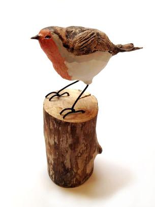 Robin on wych elm