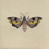 Pentimento Ceramics and Print_Lime Hawkmoth_Mimas tiliae_insect_Handmade_bespoke_ceramic tile_hand decorated_original art