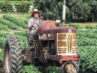 Farmers respond to marketing challenges