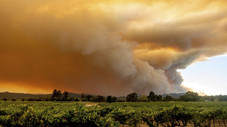 USDA offers disaster assistance to farmers and ranchers impacted by wildfires