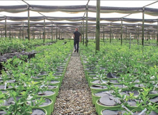 Nurseries scramble to fill demand surge