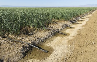 Farmland values hinge on future water availability