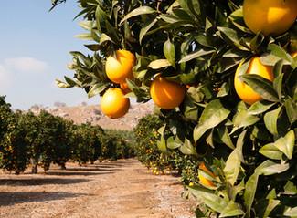 Ag shrinking under weight of California regulations – from Western FarmPress