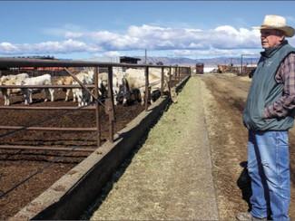 Beef supply bottleneck worries ranchers