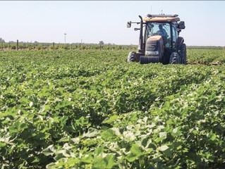 Pandemic magnifies 2020 cotton concerns