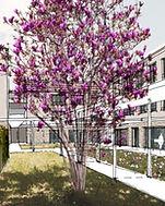 visualisierung magnolienhof 3.JPG