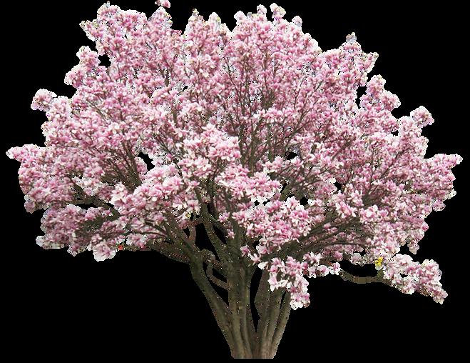 MrCutout.com - tree-0131-medium.png