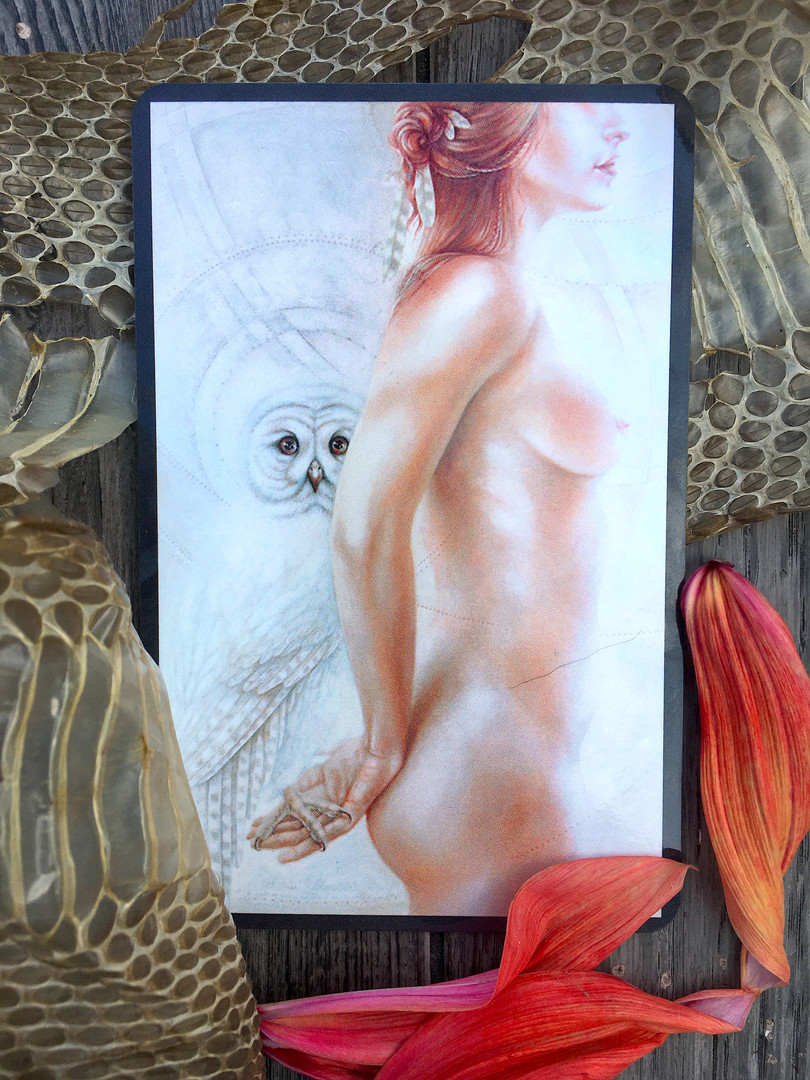 Skin & Owl.JPG