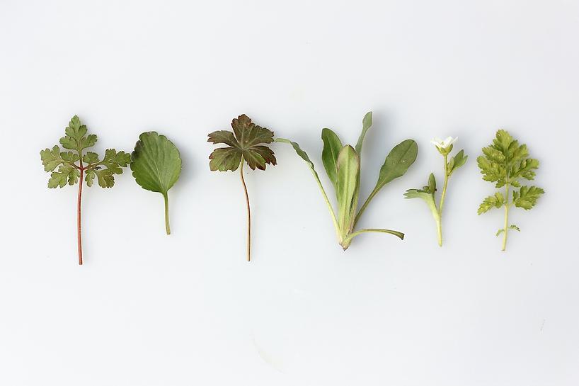 herbspicture.webp