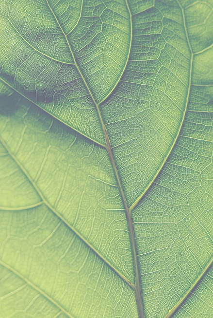 leafbackground_edited.png