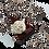 Thumbnail: Base de galleta para pay - Sabor Chocolate