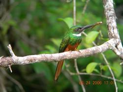 Belize2006 036 (002).jpg