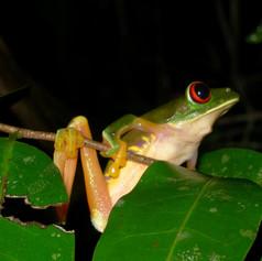 Belize2006 016 (002).jpg