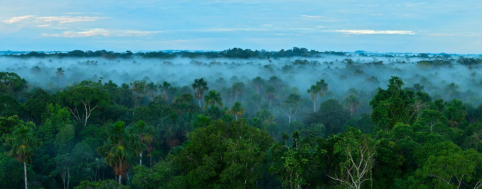 Sunrise in the rainforest. Amazon forest..jpg