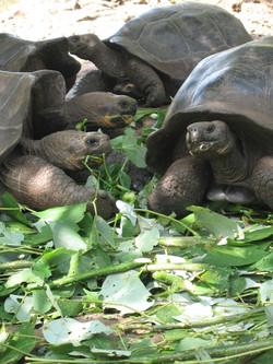 Lacks_tortoises (002).jpg