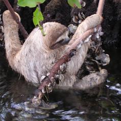 sloth (003).jpg
