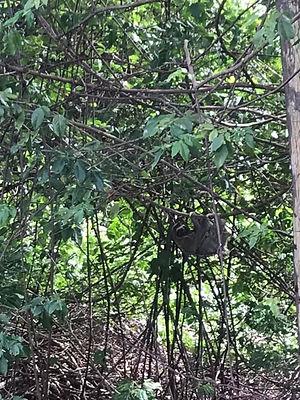 tree-sloth.jpeg