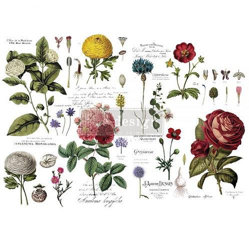 Redesign Transfer - Vintage Botanical