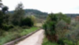 Šipan field