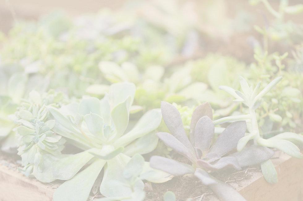 Plants_edited_edited.jpg