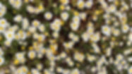 Herbs Šipan island