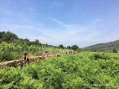Cycling through Šipan field is a wonderful adventure for the lovers of nature and the dynamic lifestyle.